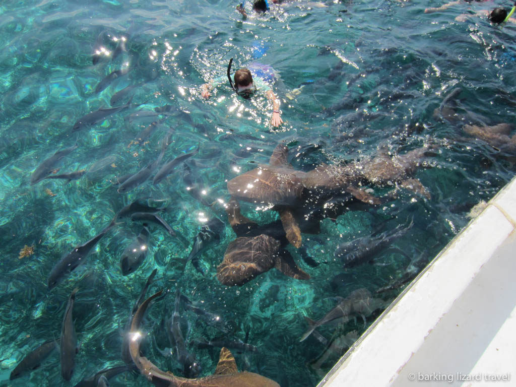 lydia snorkelling with sharks in shark ray alley belize