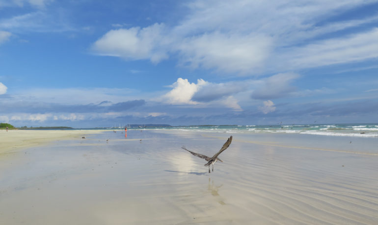 a photo of the beach in puerto villamil isabela with a pelican flying above it