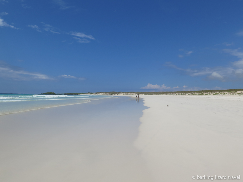 a photo of the white sand beach at tortuga bay galapagos islands