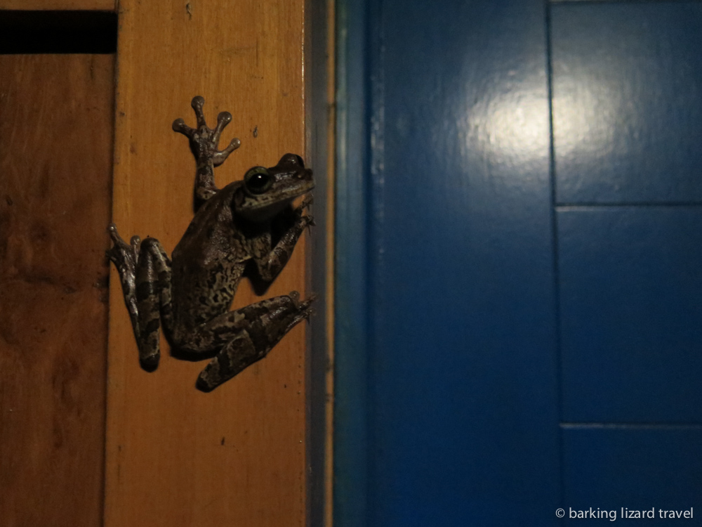 a large frog sitting on a door frame at the muyuna amazon lodge peru